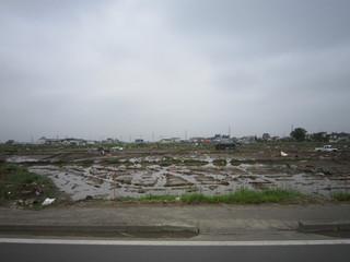 仙台市内の田圃