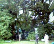 嘉納治五郎別荘跡地